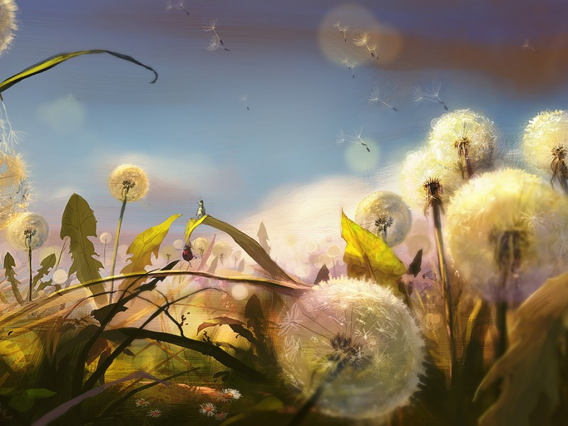 blowball_field